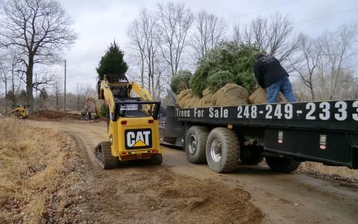 CAT loader transporting tree