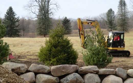 New trees and stone berm