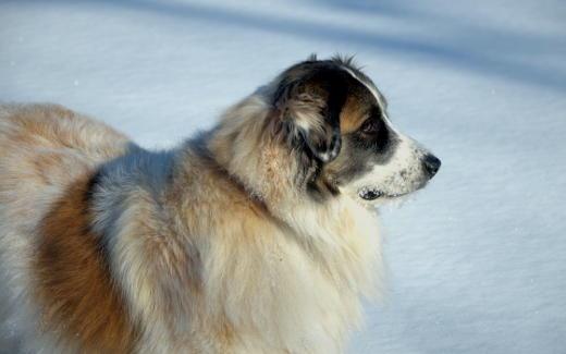 Cindy's dog Shelby